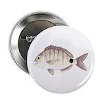 Spottail Bream Pinfish 2.25
