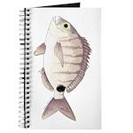 Spottail Bream Pinfish Journal