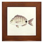 Spottail Bream Pinfish Framed Tile