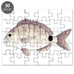 Spottail Bream Pinfish Puzzle