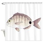 Spottail Bream Pinfish Shower Curtain