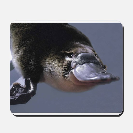 platypus Mousepad