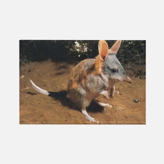 bilby Magnets