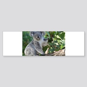 Cute koala Bumper Sticker