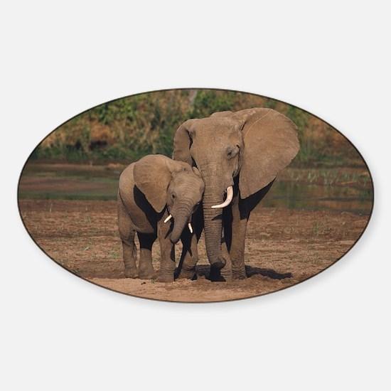 elephants Decal