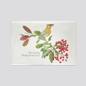 Cedar Waxwing And Berries Magnets