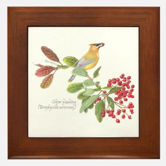 Cedar Waxwing And Berries Framed Tile