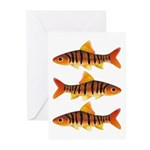 African Banded Barb Greeting Cards