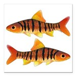 African Banded Barb Square Car Magnet 3