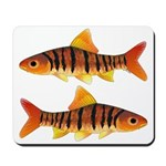 African Banded Barb Mousepad