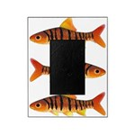 African Banded Barb Picture Frame