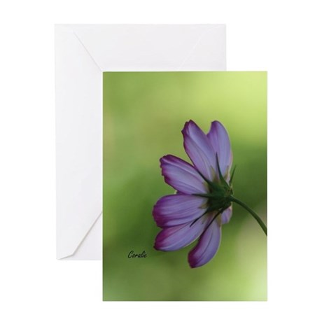 Cosmos Flower Greeting Cards