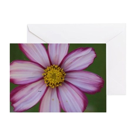 Red and White Cosmos Bloom Greeting Card
