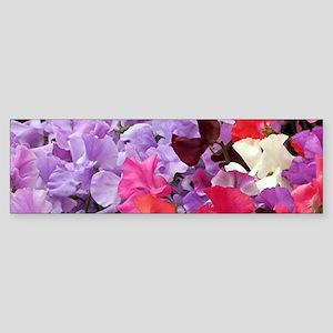 Sweet peas flowers in bloom Bumper Sticker