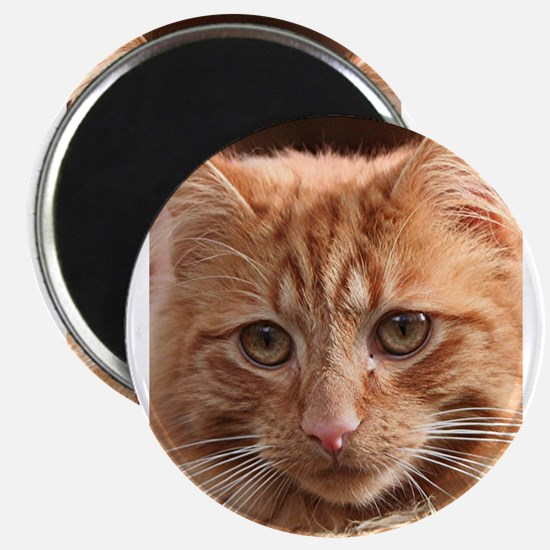 Cute ginger cat (vertical) Magnets