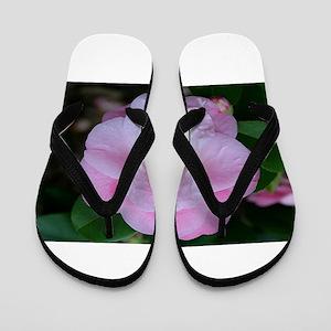 Camellia flower in bloom in garden Flip Flops
