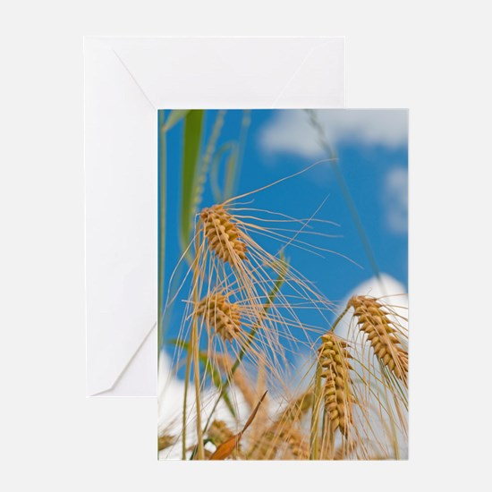 wheat Greeting Cards