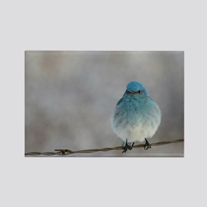 Mountain Bluebird Magnets