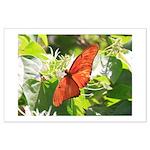 Orange Butterfly Aglow Posters