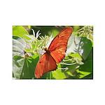 Orange Butterfly Aglow Magnets
