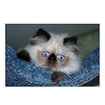 Blue-Eyed Himalayan Kitten Postcards