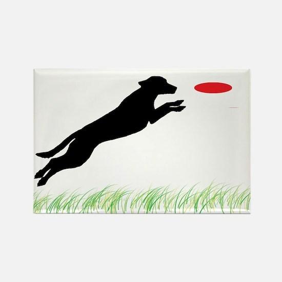Labrador Dog Red Disc Rectangle Magnet