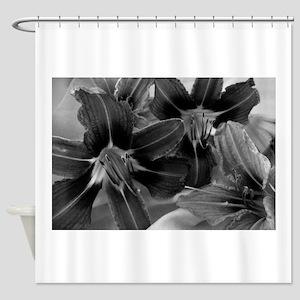 daylily bw Shower Curtain