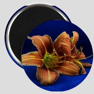 daylily 3 Magnets