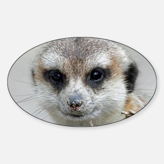 Meerkat001 Decal