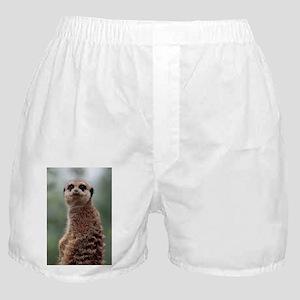 Meerkat057 Boxer Shorts