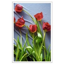 Red Tulips Bouquet Posters