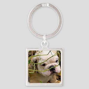 English Bulldog Puppy Square Keychain