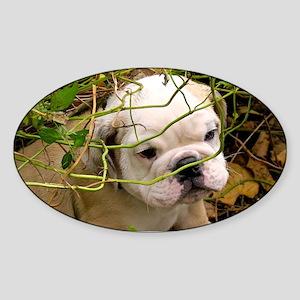 English Bulldog Puppy Sticker