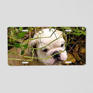 English Bulldog Puppy Aluminum License Plate