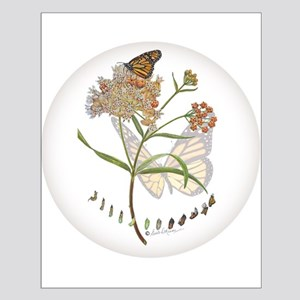 Monarch butterfly with Narrowleaf milkweed Posters