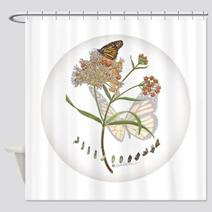 Monarch butterfly with Narrowleaf milkweed Shower