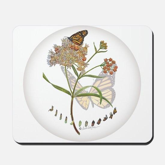 Monarch butterfly with Narrowleaf milkweed Mousepa