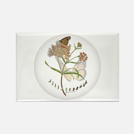 Monarch Butterfly With Narrowleaf Milkweed Magnets