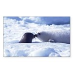Harp Seal Rectangle Sticker