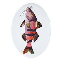 Manybar Goatfish Ornament (Oval)