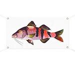 Manybar Goatfish Banner