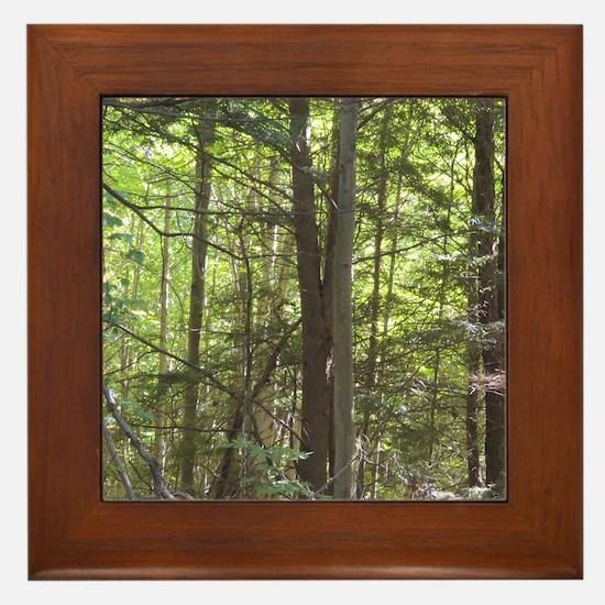 Scenery Of Trees Framed Tile