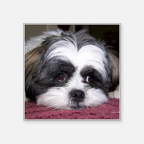 Shih Tzu Dog Photo Image Sticker