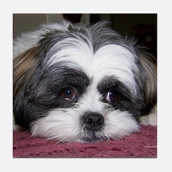 Shih Tzu Dog Photo Image Tile Coaster