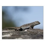 Western Fence Lizard Posters Small Poster