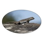 Western Fence Lizard Sticker