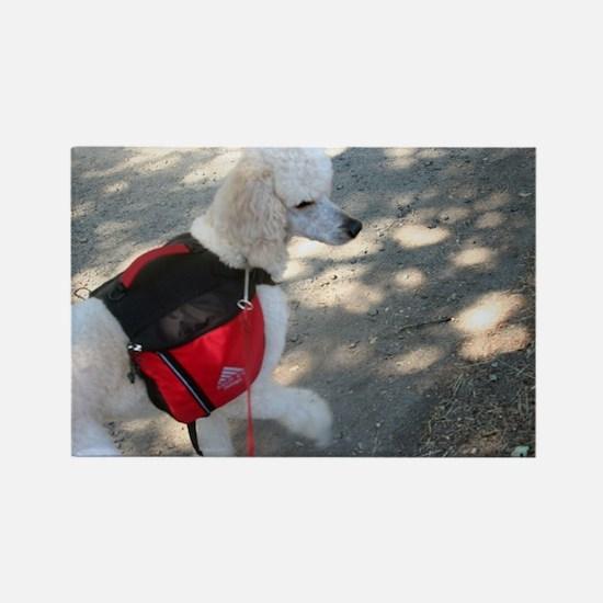 Standard Poodle Backpacking Magnets