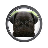 Black pug Wall Clocks