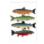 4 Char fish Postcards (Package of 8)