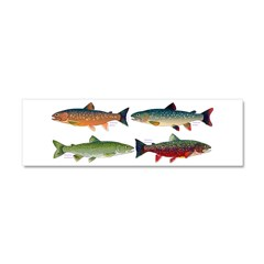 4 Char fish Car Magnet 10 x 3